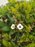 blommor little Arkivfoto