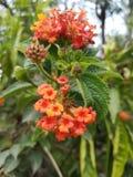 blommor little royaltyfri fotografi