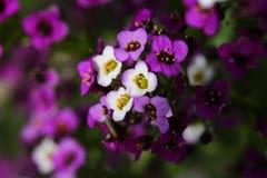 blommor little Fotografering för Bildbyråer