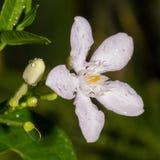 blommor little Arkivfoton