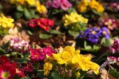 blommor little många Arkivbild