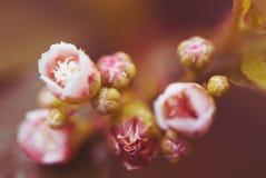 blommor little pink Arkivfoto
