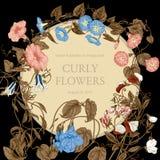Blommor Loachesna Klassisk vykort i tappningstil Botanisk illustration blom- ramprydnadar Royaltyfri Fotografi
