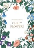 Blommor Loachesna Klassisk vykort i tappningstil Botanisk illustration blom- ramprydnadar Fotografering för Bildbyråer