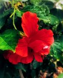 blommor luktar stoppet Royaltyfri Bild