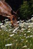 blommor luktar stoppet arkivfoto