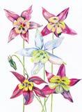 Blommor målade färger royaltyfri illustrationer