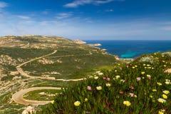 Blommor, maquis och LaRevellata fyr i Korsika Royaltyfri Foto