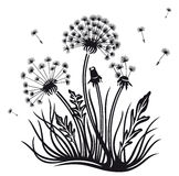 Blommor maskros Arkivfoto