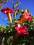Blommor med bakgrund för blå himmel Arkivbild