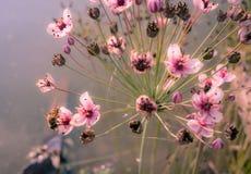 Blommor med biet och vatten arkivfoto