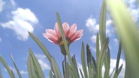 Blommor med blå himmel Royaltyfri Foto