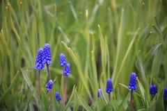 Blommor med blåa inflorescences mot bakgrunden av gröna sidor royaltyfri fotografi