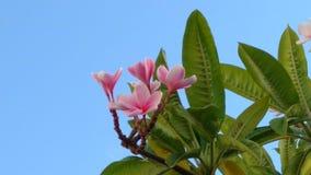 Blommor med en nätt sikt av himmel arkivfoton