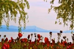 Blommor med en sikt Fotografering för Bildbyråer