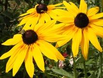 Blommor med ett bi Royaltyfri Bild