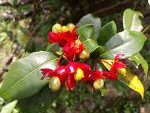 Blommor med frukter Arkivfoton
