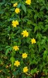 Blommor med gula blommor som dekorerar en trädgårdrabatt arkivbild
