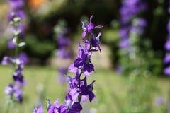Blommor med lilor i morgonträdgård royaltyfri foto