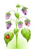 Blommor med nyckelpigor Vektor Illustrationer