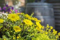 Blommor med oskarp bakgrund Arkivfoton