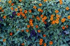 Blommor med sidor Royaltyfria Bilder