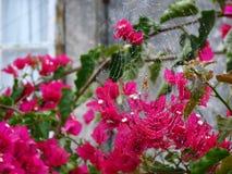 Blommor med spiderweb arkivfoto
