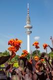 Blommor med televisiontornet, Hamburg royaltyfria bilder