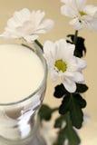 blommor mjölkar Arkivfoton