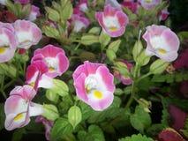 Blommor - morgonhärlighet Royaltyfria Bilder