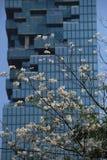 Blommor mot byggnaden Arkivbild