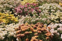 Blommor mot en bakgrund av gröna sidor (textur) royaltyfria bilder