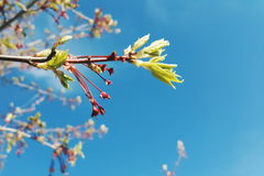 Blommor mot en härlig sommarhimmel Arkivfoton