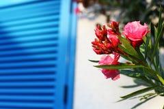 Blommor mot ett fönster med den blåa sunrullgardinen Arkivbild