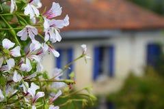 Blommor mot lantgård i söder av Frankrike arkivbild