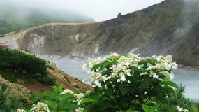Blommor nära ångar sjön, den Golovnina vulkan, Kunashir Kurily, Ryssland fotografering för bildbyråer