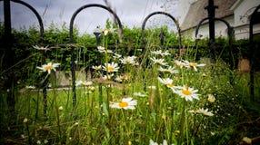 Blommor nära fäktar Arkivbilder
