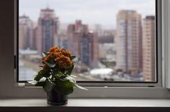 Blommor nära fönster på fönsterbrädan i motsatt suddighetshöghus och himmel Royaltyfri Bild