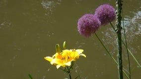 Blommor nära till sjön i parkerar fotografering för bildbyråer