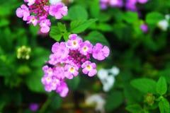 Blommor natur är intressanta Arkivfoton