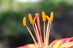 Blommor natur Royaltyfria Bilder