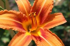 Blommor natur Royaltyfri Fotografi