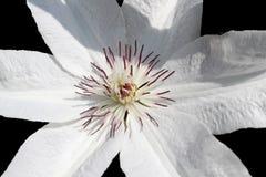 Blommor natur Royaltyfri Bild