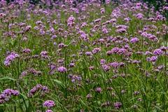 Blommor natur Royaltyfri Foto
