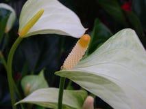 Blommor natur, makro, vit, blomma Royaltyfri Foto