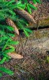 Blommor natur som är naturlig Royaltyfri Fotografi