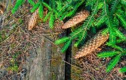 Blommor natur som är naturlig fotografering för bildbyråer