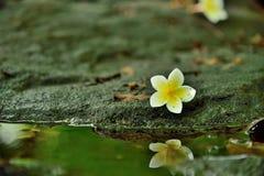 Blommor natur, vaggar, bevattnar arkivbilder