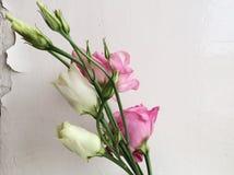 Blommor near den vita väggen Arkivfoto