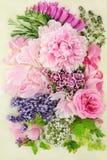 Blommor och örter för växt- medicin arkivbild
